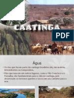 caatinga.ppsx