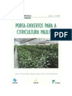 Porta-enxerto para a citricultura paulista