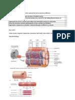 Biology unit 5 (BIOL5) Muscles