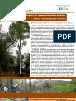 Un árbol que se extingue de los bosques del Noroeste Argentino