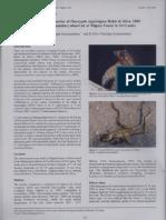 An unusual behavior of Otocryptis nigristigma (Sri Lanka)
