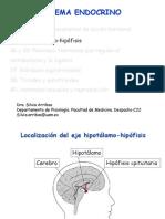 hipotalamo hipòfisis