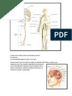 Cuáles son las células exclusivas del sistema nervioso