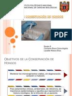 Conservacion Hongos.pptx