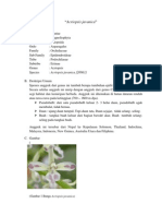 Acriopsis Javanica