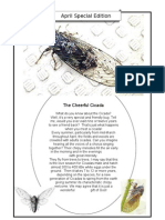 The Chirpy Cicada