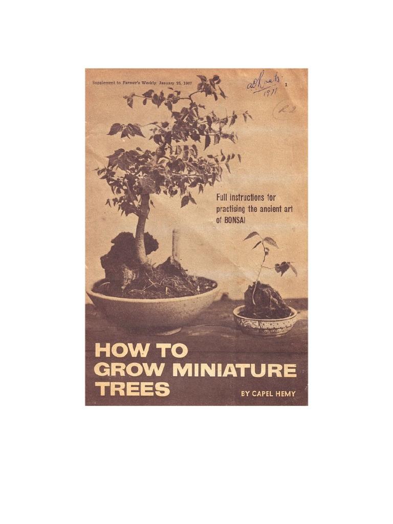 Miniature Trees Grafting Bonsai Wiring Yew