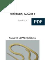 Praktikum Parasit 1