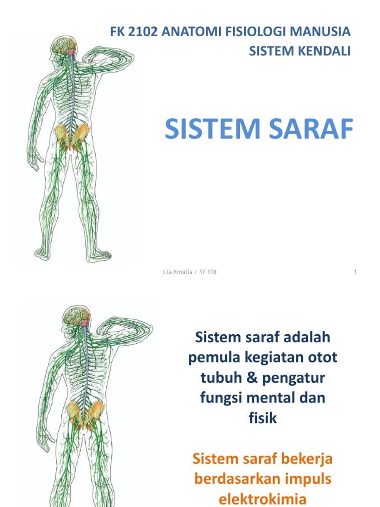 Anatomi Dan Fisiologi Sistem Syaraf Manusia