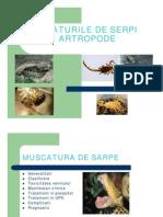 Muscaturile de Serpi, Artropode,Scorpioni, Insecte [Compatibility Mode]