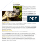 Las enfermedades de la tortuga I.docx
