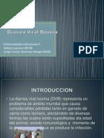 Diarrea Viral Bovina