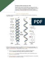 A mensagem do DNA é passada para o RNA