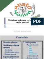 9 Vértebras, columna vertebral y cuello parietal