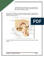 Resumen de Neuroanatomia Humana
