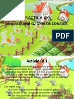 Presentación Practica de los conejos.pptx