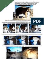 La verdadera Historia de La Elefante Asiática BOMBY, en Guatemala.