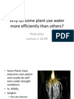 Lect #2 Why Do Some Plant Use Water More Efficiently