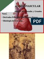 Anatomia Del Corazon (1)