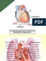 Anatomia Del Corazon (2)