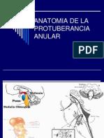 103013475-4anatomia-de-La-Protuberancia-Anular-1221776822382145-9.ppt