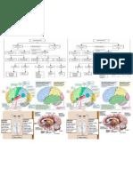 Sistema Nervioso esquemas  y graficos.docx