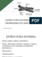 Estructura Externa Del Cromosoma Eucariotico 2006