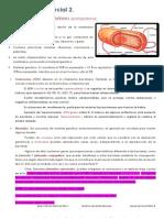 Microbiologia Parcial 2