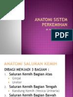 Anatomi Sistem Perkemihan SG