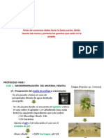 ProtocolosyWiki.pptx