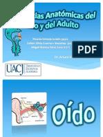 diferenciasanatmicasdelnioydeladulto-121122184712-phpapp02