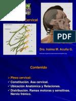 7. Plexo Cervical