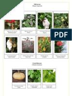 Edit Nama2 Latin Plant