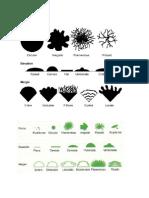 Material Identificacion Morfologia