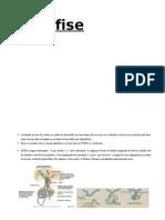 Ajuda Histologia!.doc