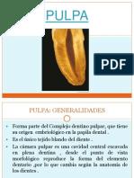 exposicion_pulpa