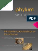 Phylum Moluscos, Equinodermos