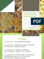 APICULTURA ÎN ROMÂNIA