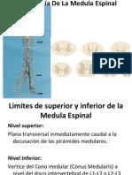 Anatomia de La Medula Espinal