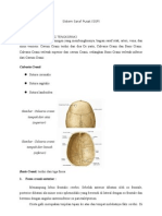 Anatomi SSP.doc