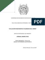 Evaluacion Radiografica Pulmonar en El Perro