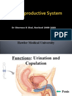 Concise Reproductive System Physiology