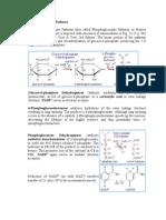 Pentose Phosphate Pathway