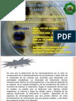 CONSERVACIÓN MEDIANTE EL EMPLEO DE TEMPERATURAS ELEVADAS - BARRANZUELA -NAVARRO-SAAVEDRA