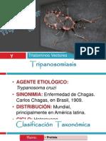 13 Chagas