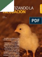 Climatizando Incubacion Pollitos Avicultura