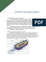 Importanta Bacteriilor in Viata Omului Si a Planetei