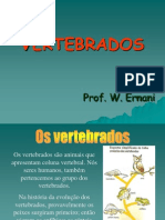 281_736Vertebrados (1)