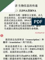 第三讲 生物信息的传递(上)—从DNA到RNA