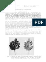 pp73Septoria -Crisantemo